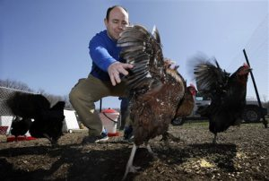 In this Monday, April 6, 2015 photograph, Phillip Tompkins tries to catch a chicken at a Rent The Chicken operation in Mount Holly, N.J. In two years, Pennsylvania-based Rent The Chicken has expanded to three other states, plus Toronto. (AP Photo/Mel Evans)